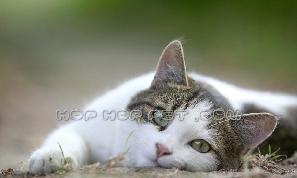 فروش گربه خانگی